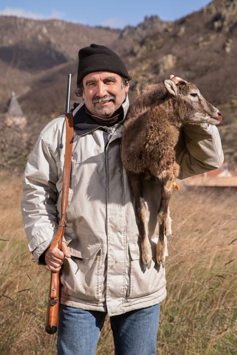 Chasse au mouflon
