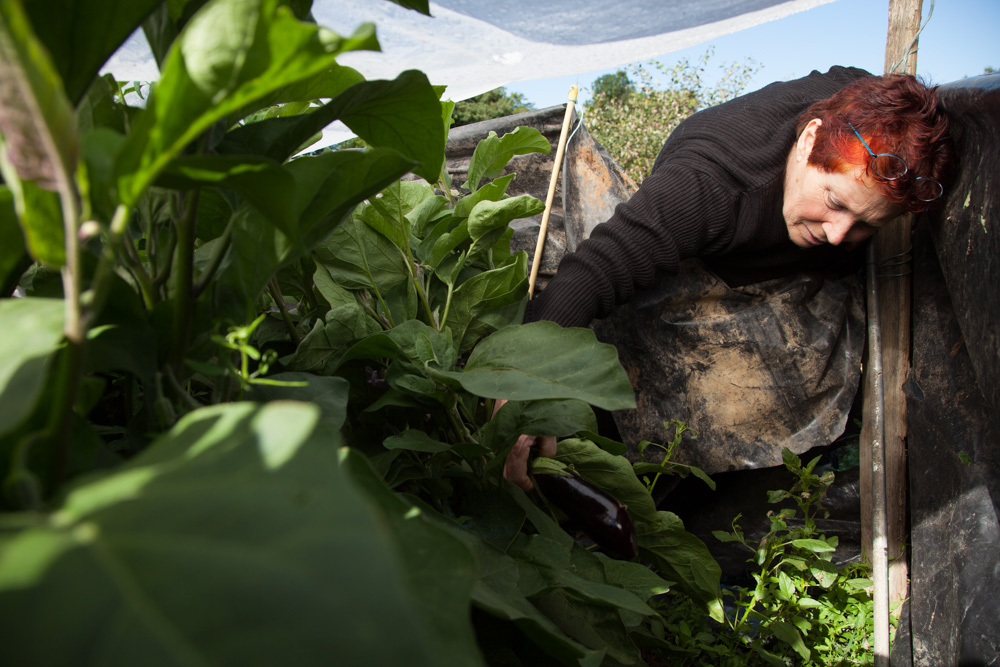 Vivre et habiter autrement dans une maison en paille et torchis avec toit végétal